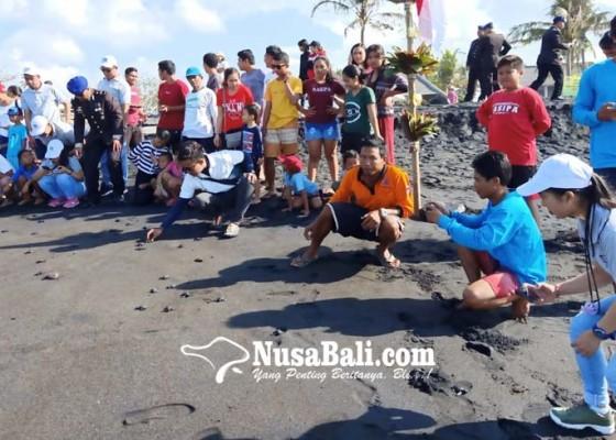 Nusabali.com - 170-ekor-tukik-dilepasliarkan