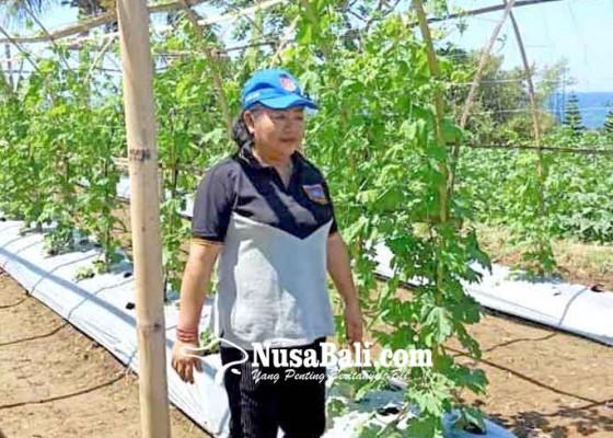 Nusabali.com - bupati-cek-demplot-festival-subak