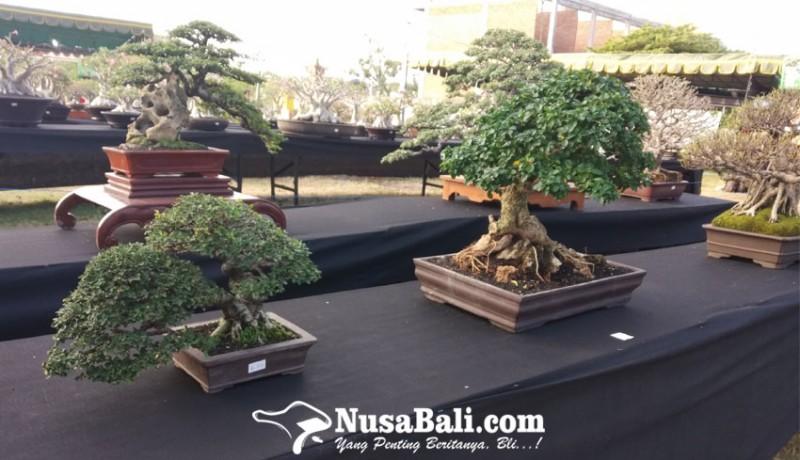 www.nusabali.com-festival-bonsai-semarakkan-sanur-village-festival-2019