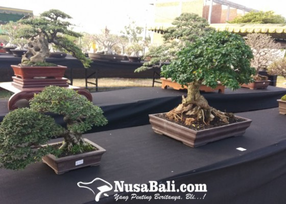 Nusabali.com - festival-bonsai-semarakkan-sanur-village-festival-2019