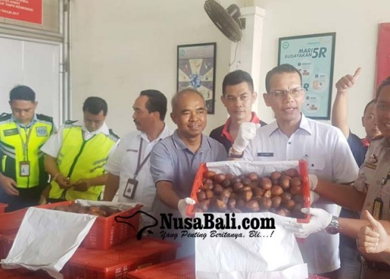Nusabali.com - bali-ekspor-salak-dan-kakao