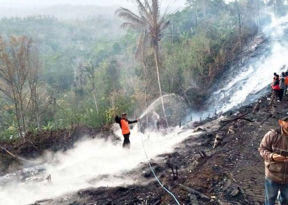 Nusabali.com - kandang-terbakar-12-ribu-ayam-terpanggang