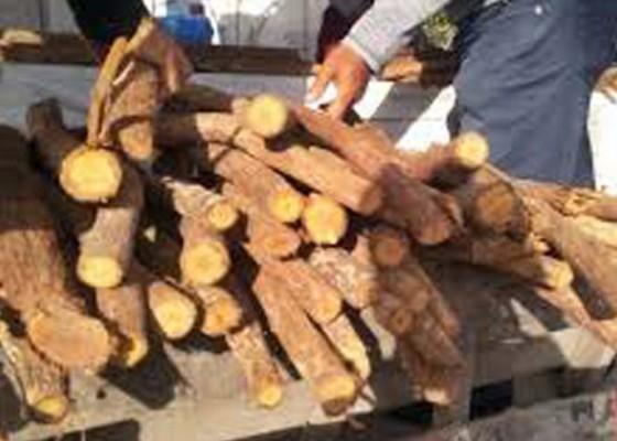 Nusabali.com - heboh-kayu-pembunuh-kanker-dijual-bebas