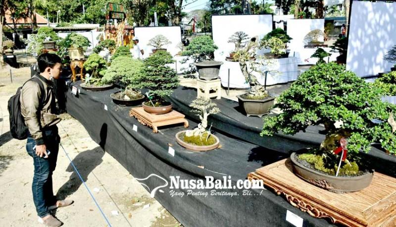 www.nusabali.com-indahanya-bonsai-di-ajang-svf-2019