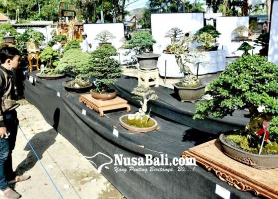 Nusabali.com - indahanya-bonsai-di-ajang-svf-2019