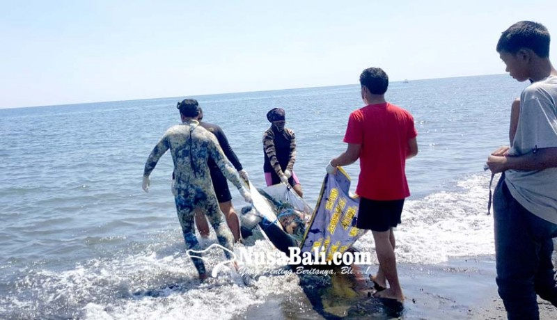 www.nusabali.com-bangkai-paus-dibedah-dan-ditenggelamkan-ke-laut