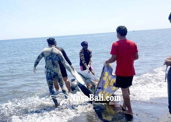 Nusabali.com - bangkai-paus-dibedah-dan-ditenggelamkan-ke-laut