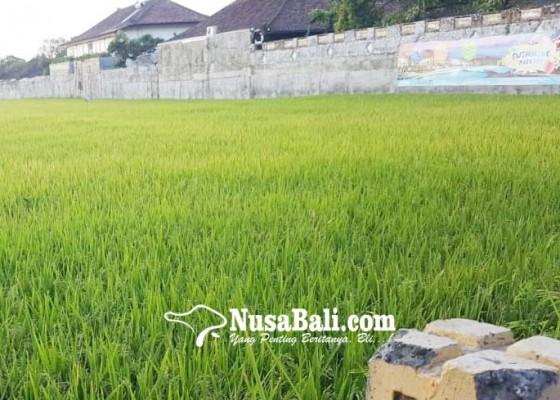 Nusabali.com - jalur-seririt-singaraja-makin-kehilangan-bengang