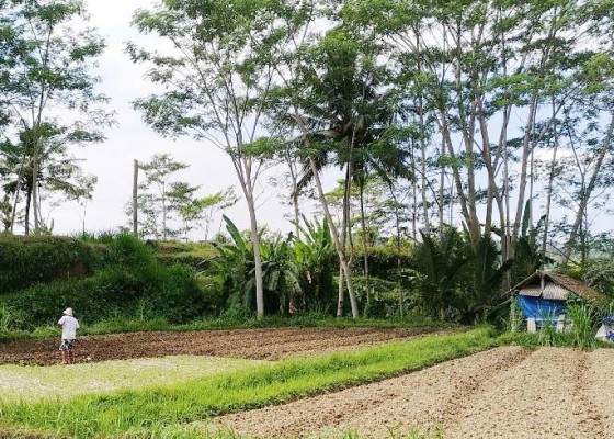 Nusabali.com - bali-kehilangan-karang-bengang
