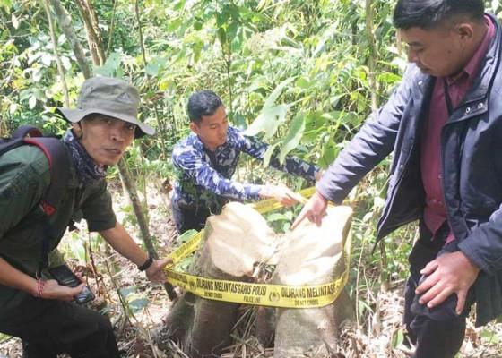 Nusabali.com - curi-kayu-hutan-untuk-bangun-rumah
