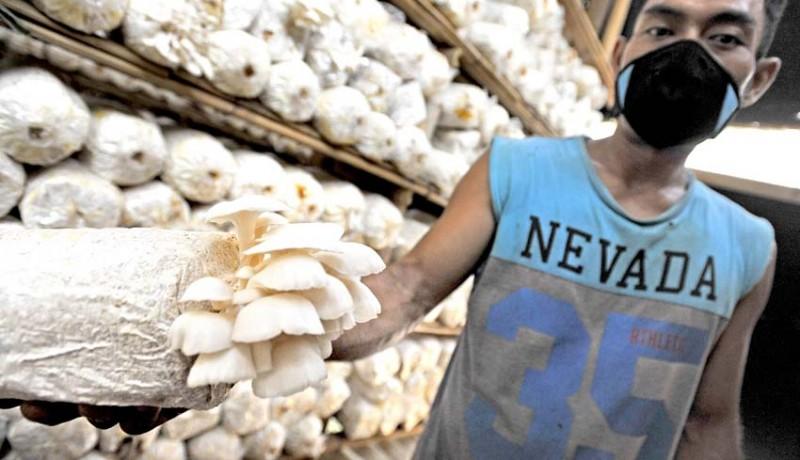 www.nusabali.com-peluang-pasar-jamur-masih-terbuka