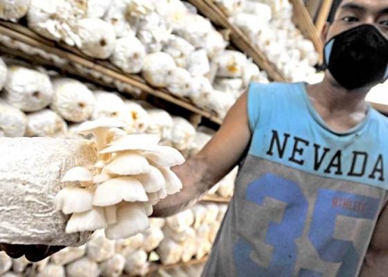 Nusabali.com - peluang-pasar-jamur-masih-terbuka