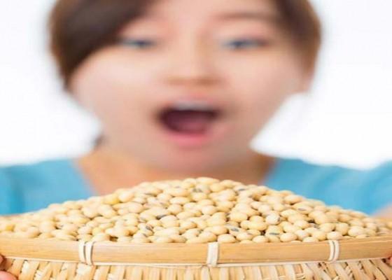 Nusabali.com - kesehatan-kedelai-sumber-nutrisi-sehat