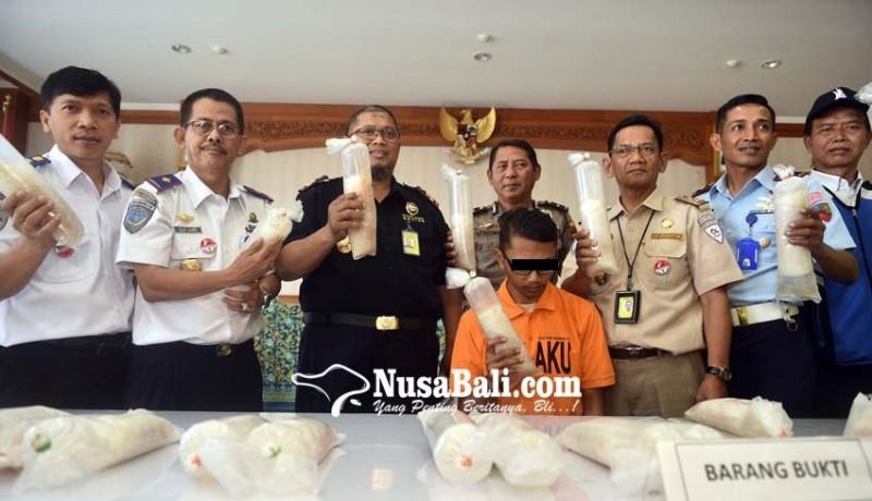 www.nusabali.com-petugas-bandara-selundupkan-17192-benih-lobster