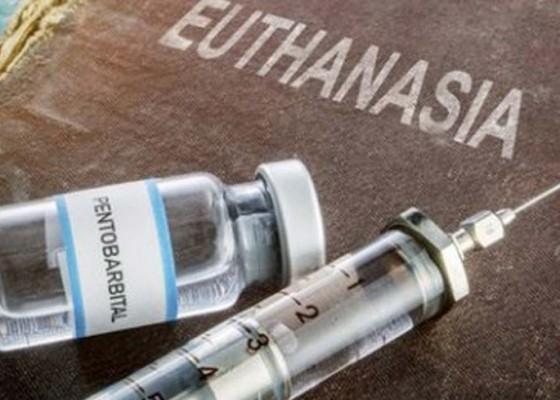 Nusabali.com - komnas-ham-berharap-eutanasia-dilegalkan