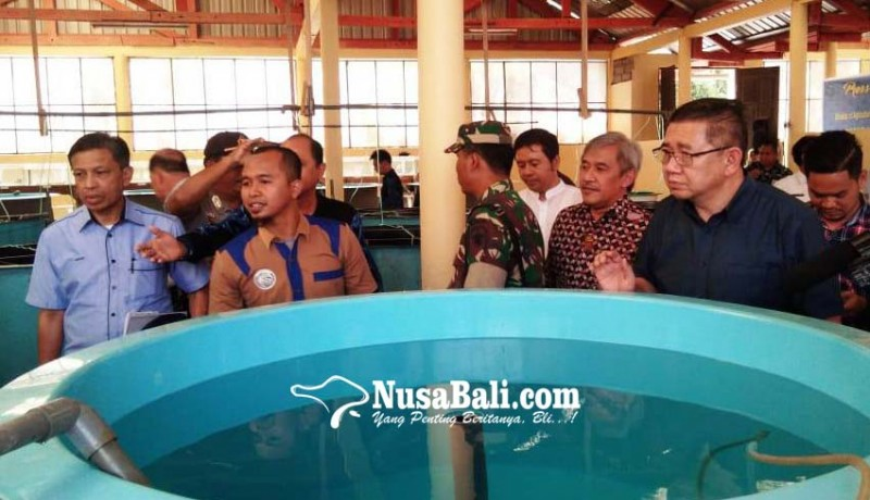 www.nusabali.com-malaysia-lirik-pembenihan-budidaya-kelautan-di-gerokgak