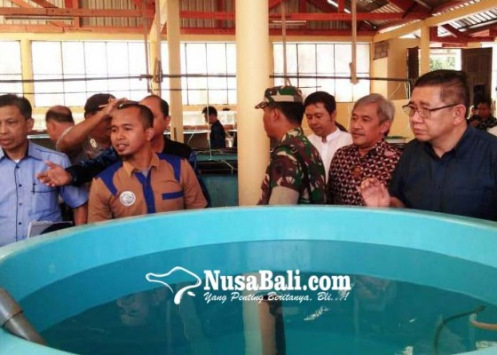 Nusabali.com - malaysia-lirik-pembenihan-budidaya-kelautan-di-gerokgak