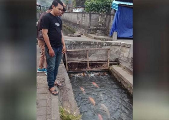 Nusabali.com - stt-di-bagunliman-pelihara-ikan-hias