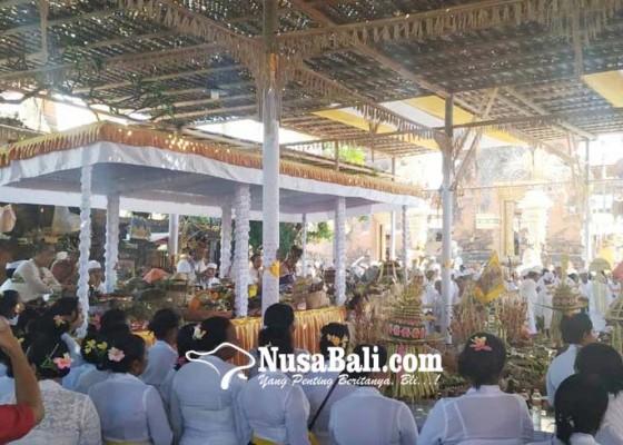 Nusabali.com - desa-adat-kerobokan-gelar-upacara-tawur-balik-sumpah-utama
