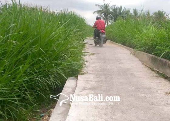 Nusabali.com - jalan-usaha-tani-subak-penida-dinilai-buruk