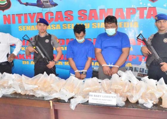 Nusabali.com - penyelundupan-benur-senilai-rp-5-miliar-digagalkan