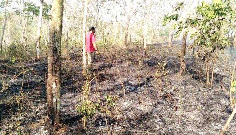 www.nusabali.com-lagi-lahan-perkebunan-perusda-bali-terbakar