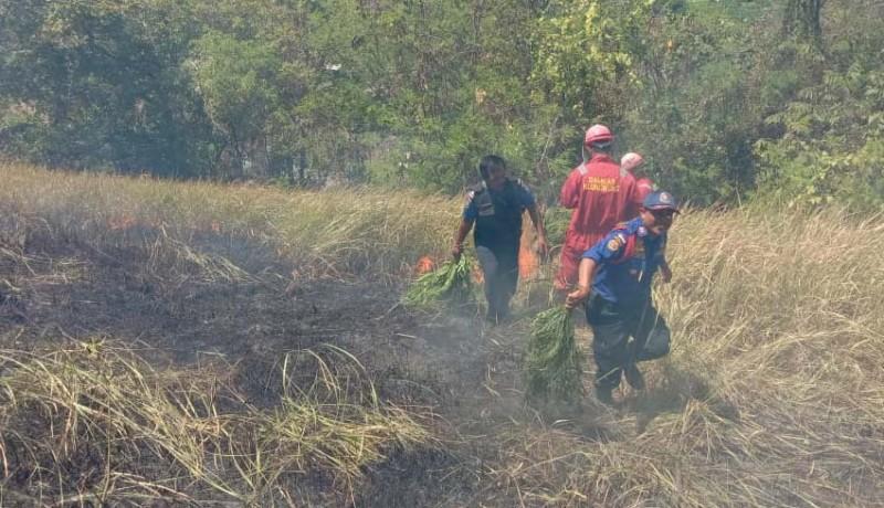 www.nusabali.com-area-obyek-bukit-belong-terbakar