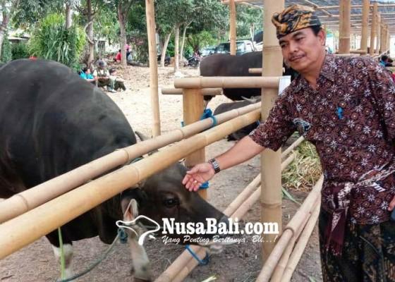 Nusabali.com - pemprov-gelar-expo-sapi-dan-panen-godel