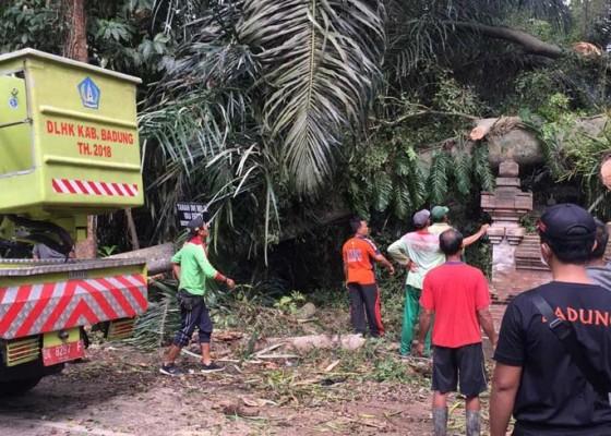 Nusabali.com - pohon-tumbang-timpa-panyengker-dan-palinggih