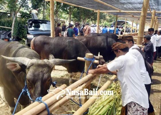 Nusabali.com - bali-didorong-produksi-daging-sapi-olahan