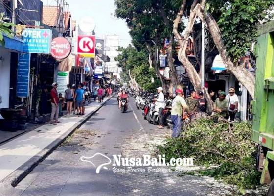 Nusabali.com - angin-kencang-pohon-tumbang-di-kuta
