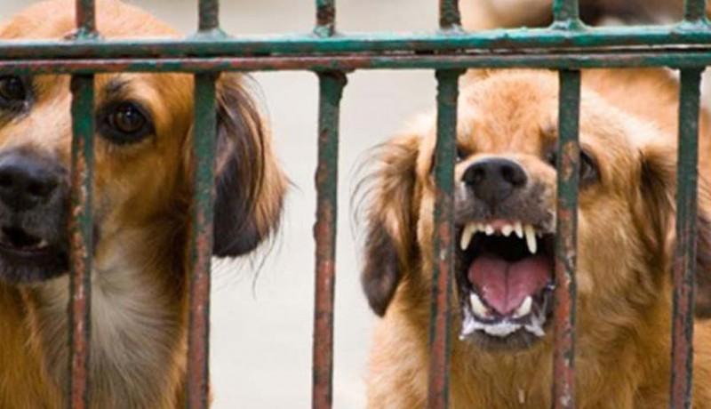www.nusabali.com-tahun-2020-bali-ditarget-bebas-rabies