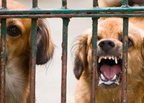 Nusabali.com - tahun-2020-bali-ditarget-bebas-rabies