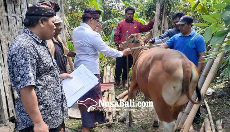 www.nusabali.com-kualitas-ternak-bali-diharapkan-lebih-meningkat