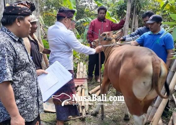 Nusabali.com - kualitas-ternak-bali-diharapkan-lebih-meningkat