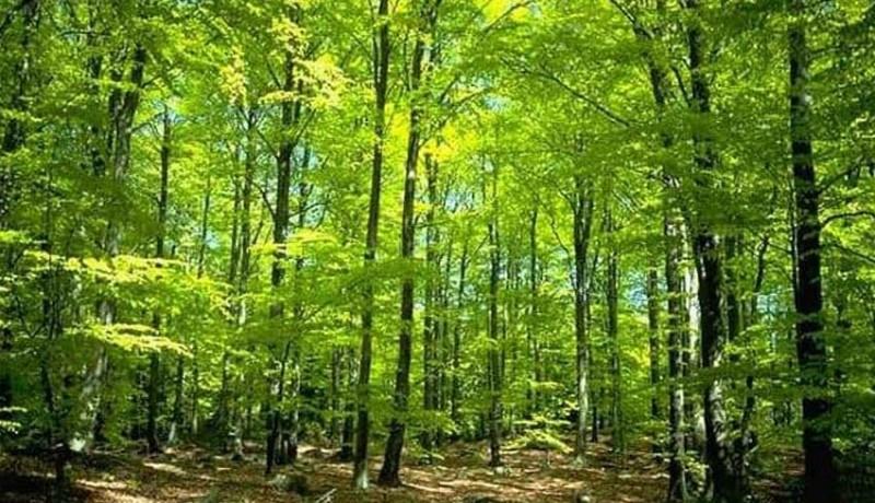 www.nusabali.com-dua-hutan-di-tabanan-akan-ditetapkan-menjadi-hutan-adat
