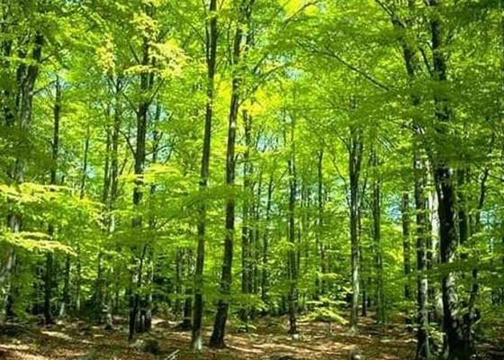 Nusabali.com - dua-hutan-di-tabanan-akan-ditetapkan-menjadi-hutan-adat