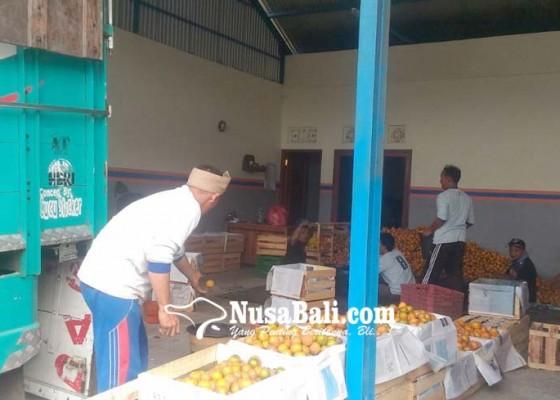 Nusabali.com - harga-jeruk-kintamani-membaik