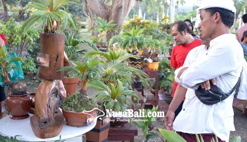 Nusabali Com Bonsai Kelapa Sedot Perhatian Pengunjung