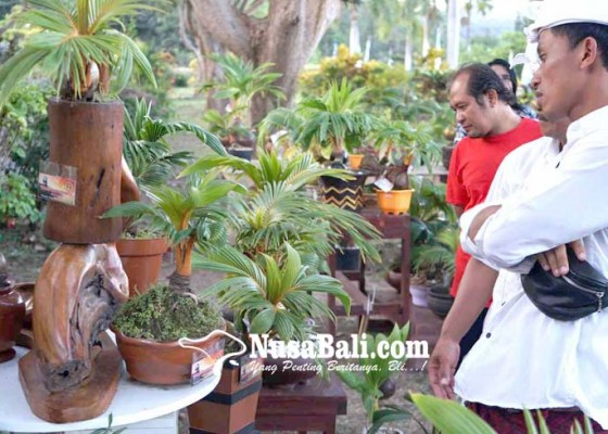 Nusabali.com - bonsai-kelapa-sedot-perhatian-pengunjung