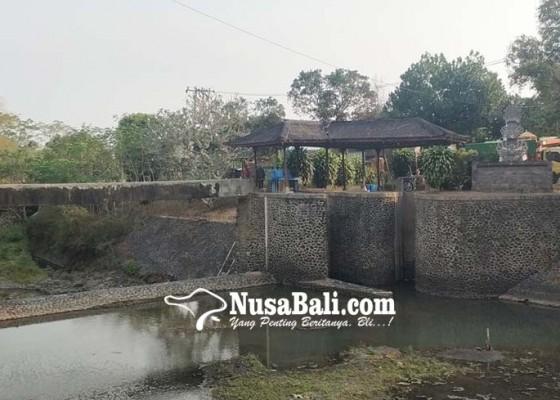 Nusabali.com - hutan-bermasalah-sungai-di-jembrana-mengering