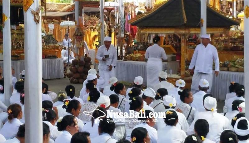 www.nusabali.com-krama-desa-adat-kerobokan-gelar-upacara-pangremekan-lan-nyineb