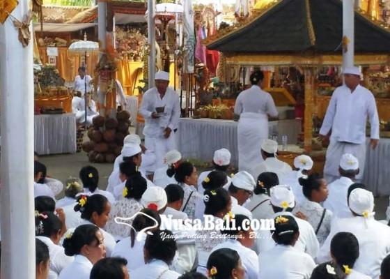 Nusabali.com - krama-desa-adat-kerobokan-gelar-upacara-pangremekan-lan-nyineb