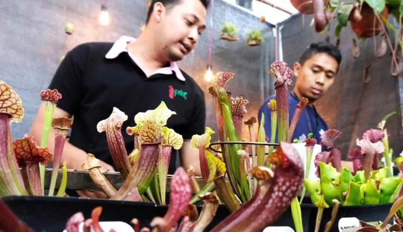 www.nusabali.com-kementan-pacu-ekspor-tanaman-hias