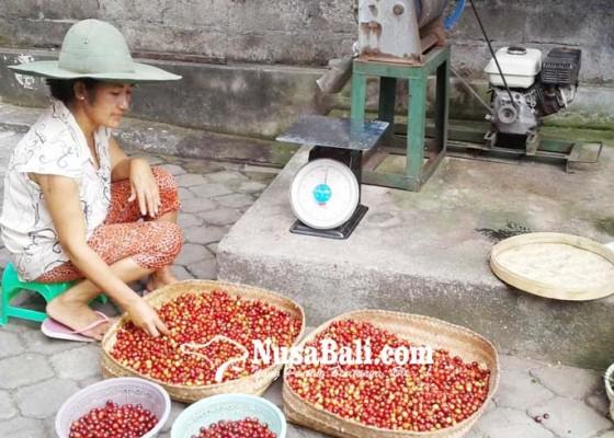 Nusabali.com - cita-rasa-kopi-bergantung-proses-pengolahan