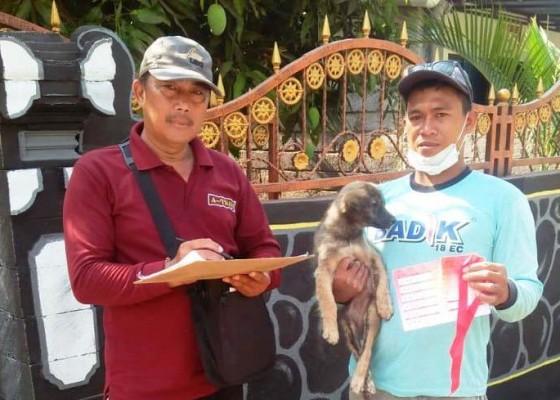 Nusabali.com - dinas-pertanian-penyisiran-vaksinasi