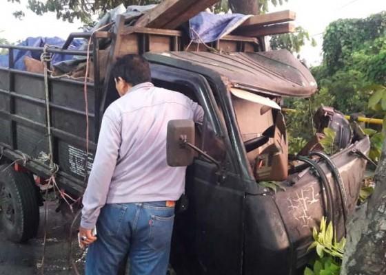 Nusabali.com - truk-bawa-penyu-tabrak-pohon-sopir-kabur