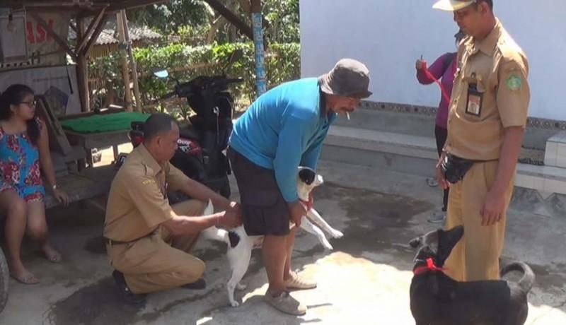 www.nusabali.com-anjing-rabies-gigit-2-warga-di-sangkaragung