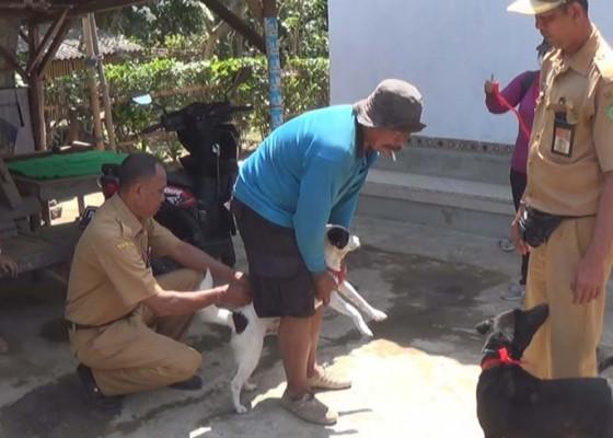 Nusabali.com - anjing-rabies-gigit-2-warga-di-sangkaragung