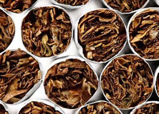 Nusabali.com - pakar-saatnya-bali-pelopori-kajian-ilmiah-tembakau-alternatif